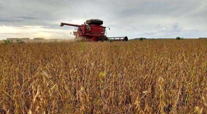Conab vê crescimento de 11,6% na safra de soja apesar da estiagem