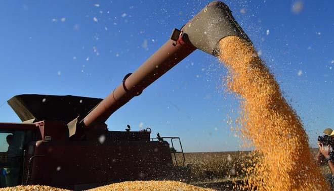 Maracaju e Sidrolândia estão entre municípios com maior produção agrícola do país