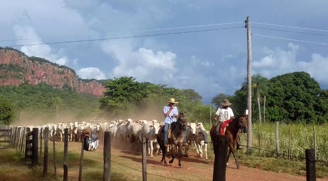 Atualização de Cadastro: Produtores rurais devem atualizar cadastro da agropecuária e de estoque de animais