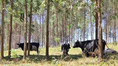 Sustentabilidade pós-Covid-19 é tema de live na AgroBrasília