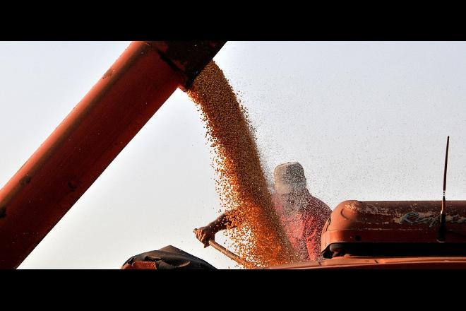 Colheita do milho entra na reta final e Estado ganha destaque mundial