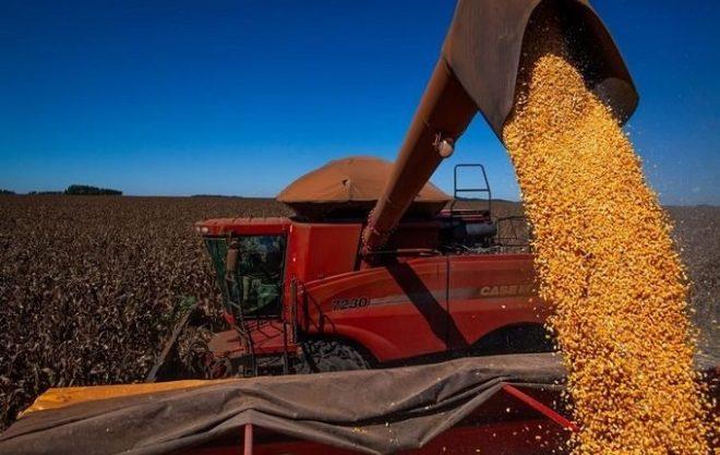 Soja e milho podem ter importação sem tarifa