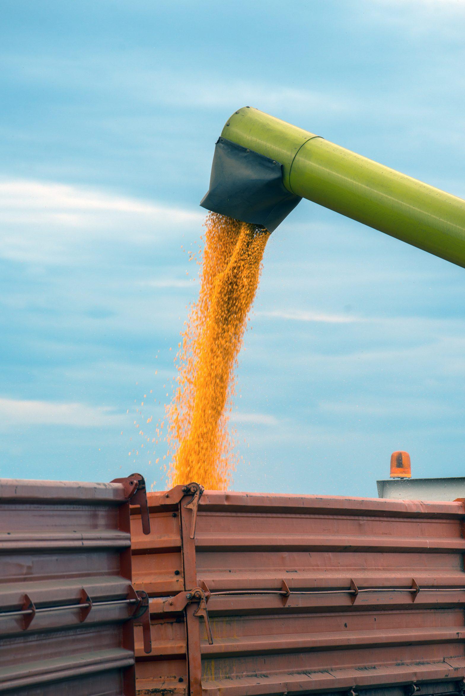 Milho: USDA aponta estoques americanos e mundiais acima do esperado