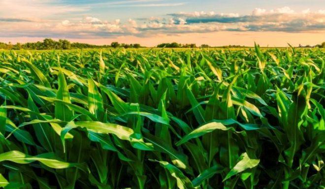 La Niña pode se estender até a primavera e os efeitos impactam no agro
