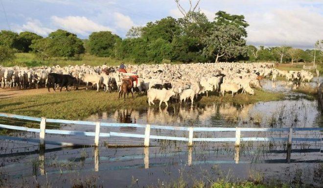 Embrapa desenvolve primeira vacina contra carrapato bovino do país