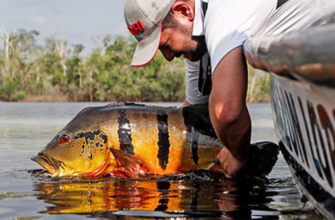 Temporada de pesca volta com queda do movimento no Pantanal de Corumbá