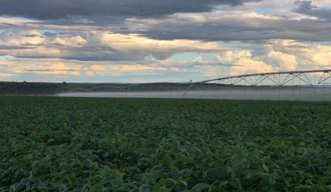 Governo prorroga até final de 2024 a redução de ICMS na energia elétrica para irrigação