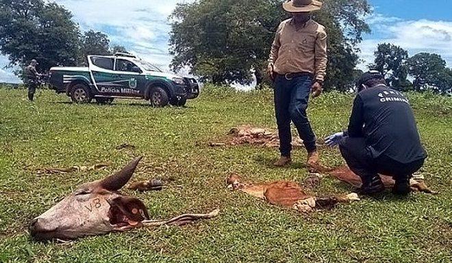 Governo cria delegacia de combate a crimes rurais e abigeato, medida comemorada pelos produtores
