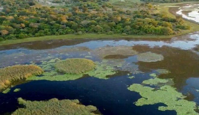 Com novas medidas, governo avança para implantar o Parque Estadual do Pantanal do Rio Negro
