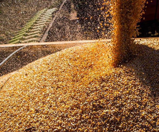 Pessimismo no mercado gera baixas nas cotações de soja, milho e café