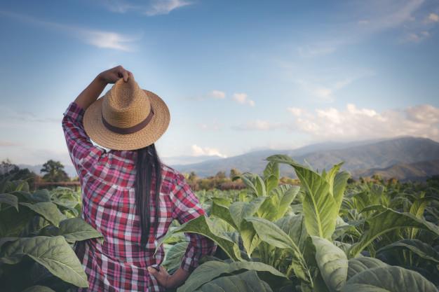 Pesquisa sobre participação feminina no agro retrata orgulho da profissão